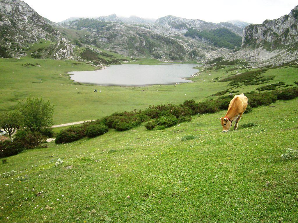 Lago Ercina - Lagos de Covadonga - Picos de Europa - Asturias Paraiso Rural