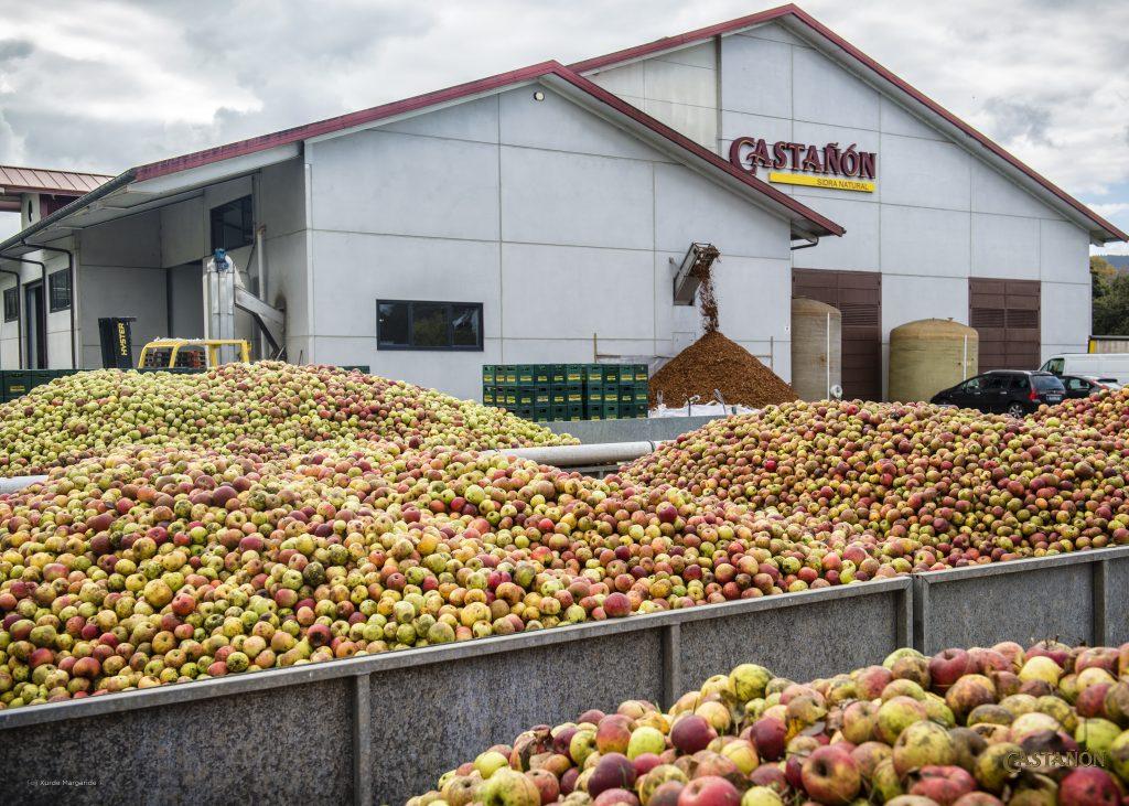 Manzanas para la elaboración de la sidra