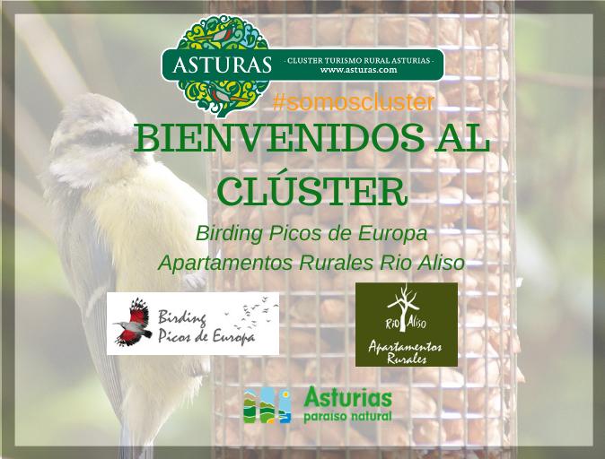 Nuevos socios del Clúster: Birding Picos de Europa / Aptos. Rurales Rio Aliso