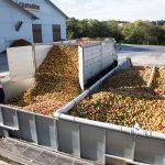 Manzanas que se convertiran en sidra