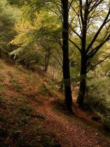 El fitu - Colunga - Asturias